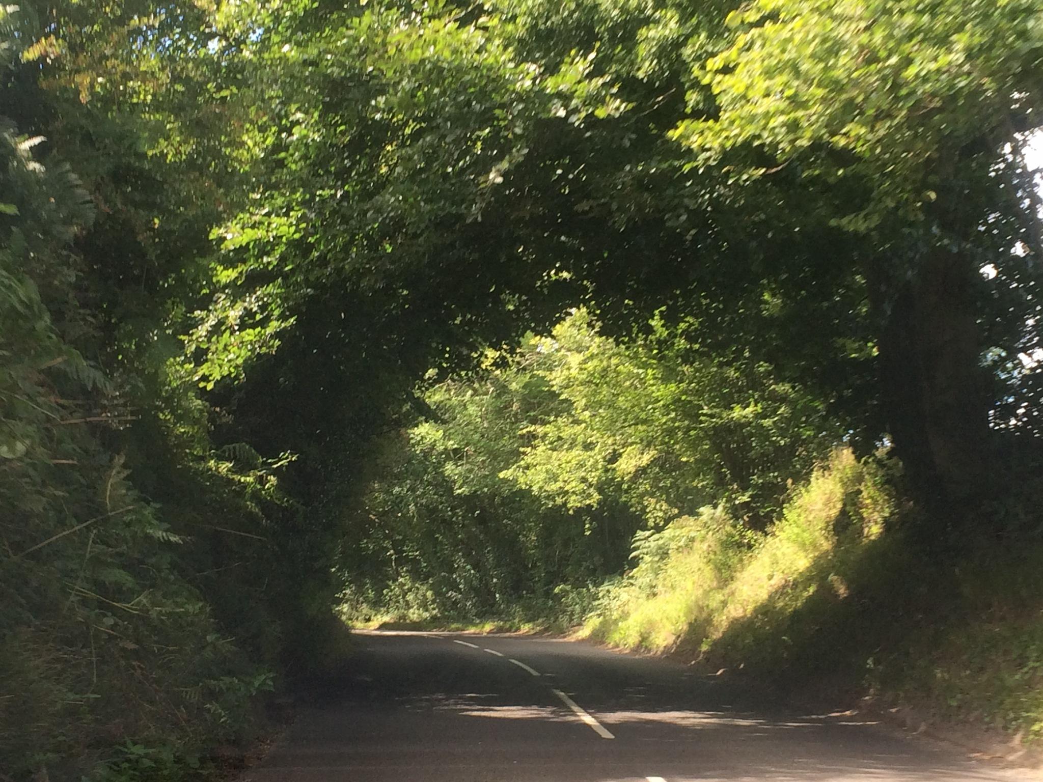 Tree Tunnel  by HelenaM