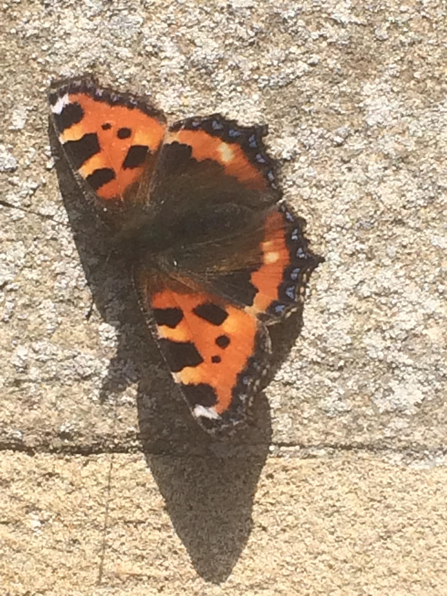 Beautiful Butterfly  by HelenaM