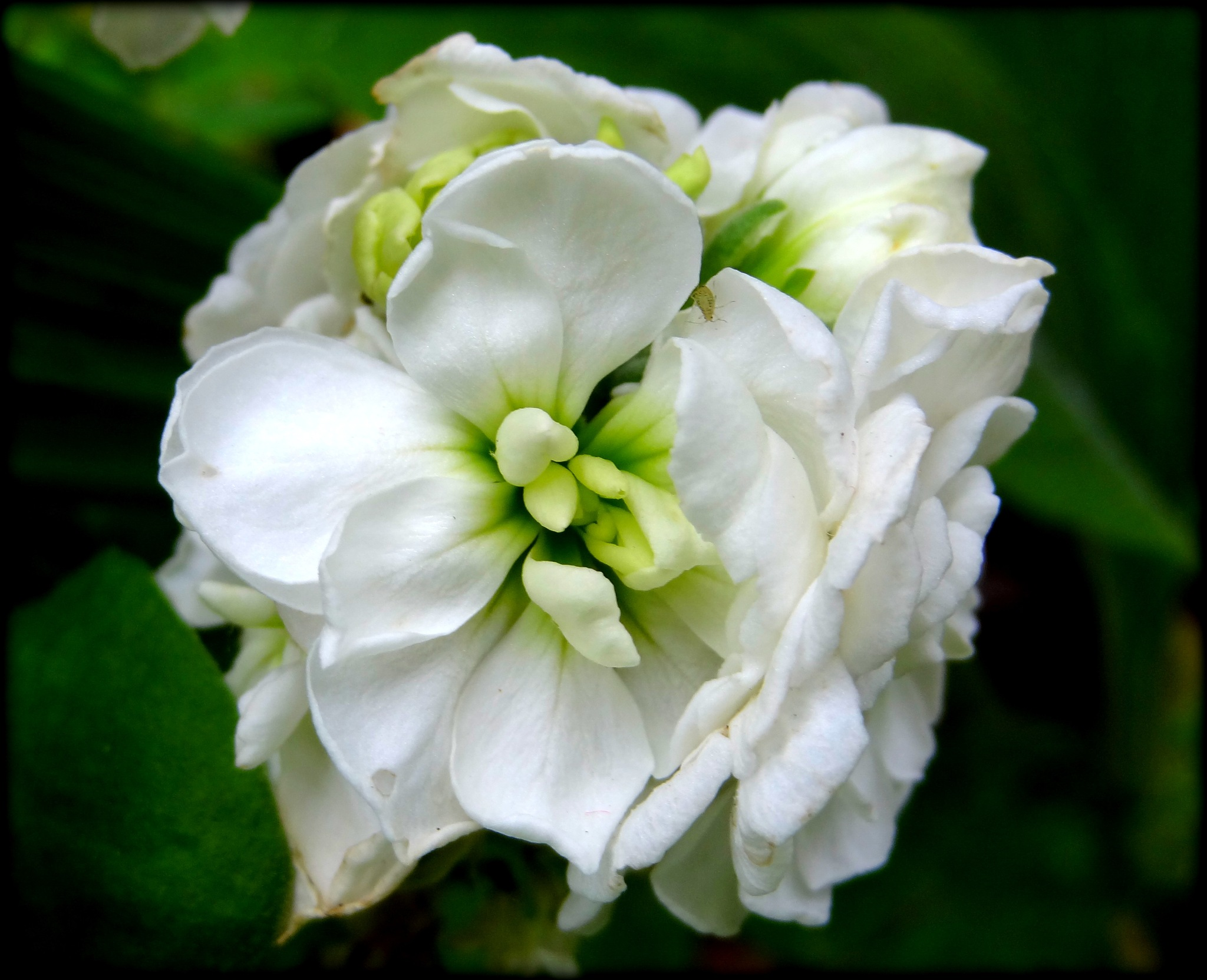 A Stock Flower by jcmunckton