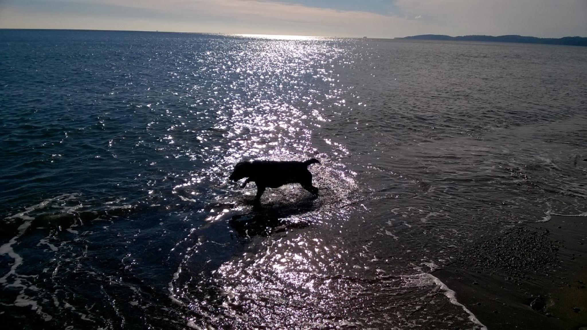 Layla on the beach by sanjay