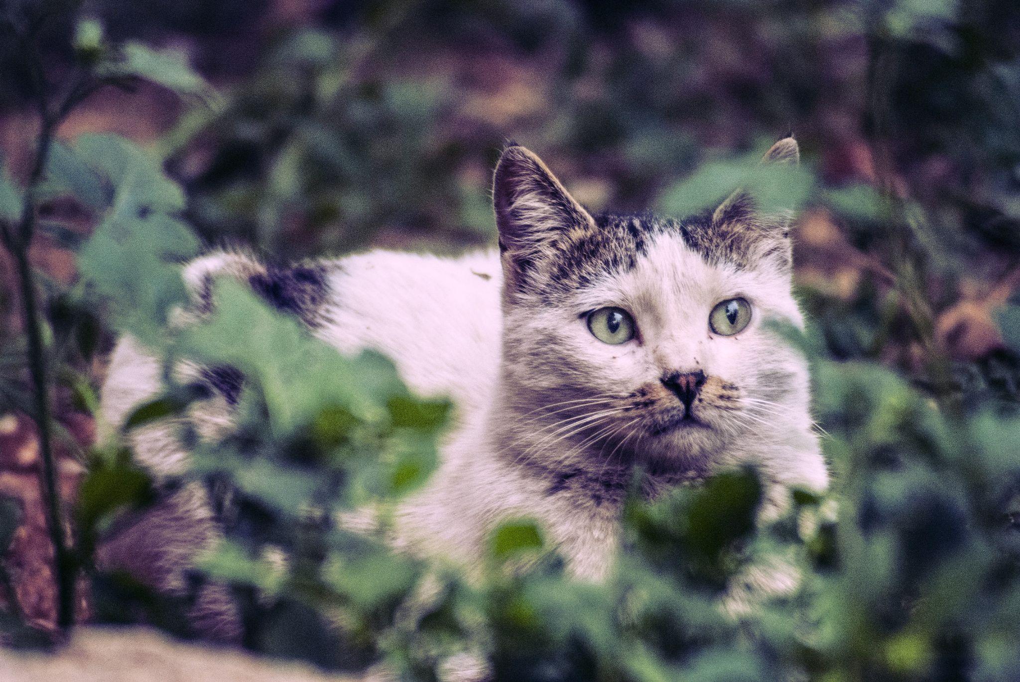 Kitty by Ayham Ktait
