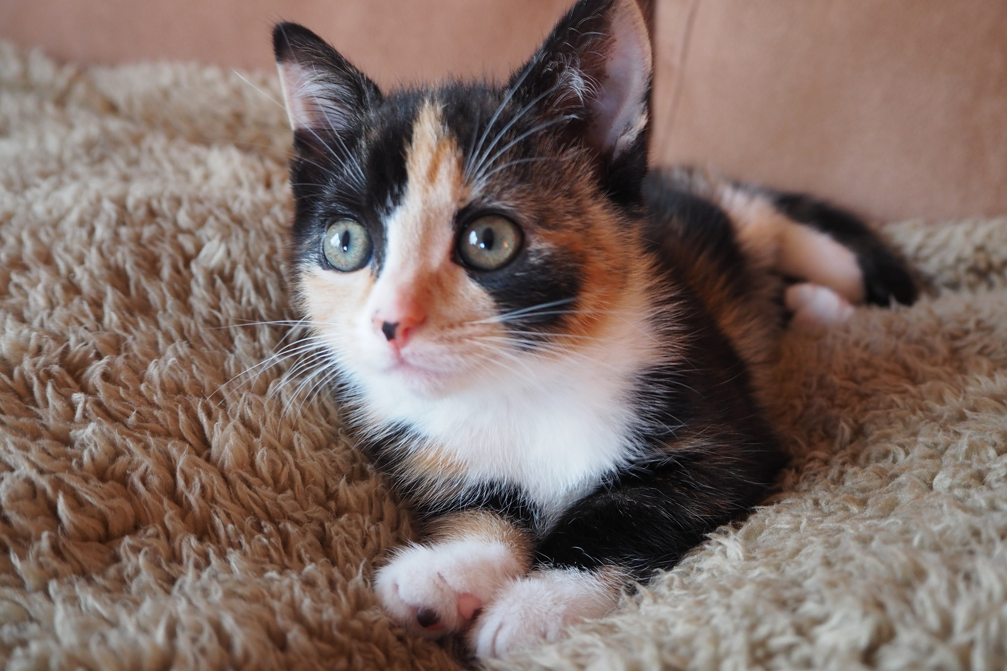 Ginny at 10 weeks by jeremy1960