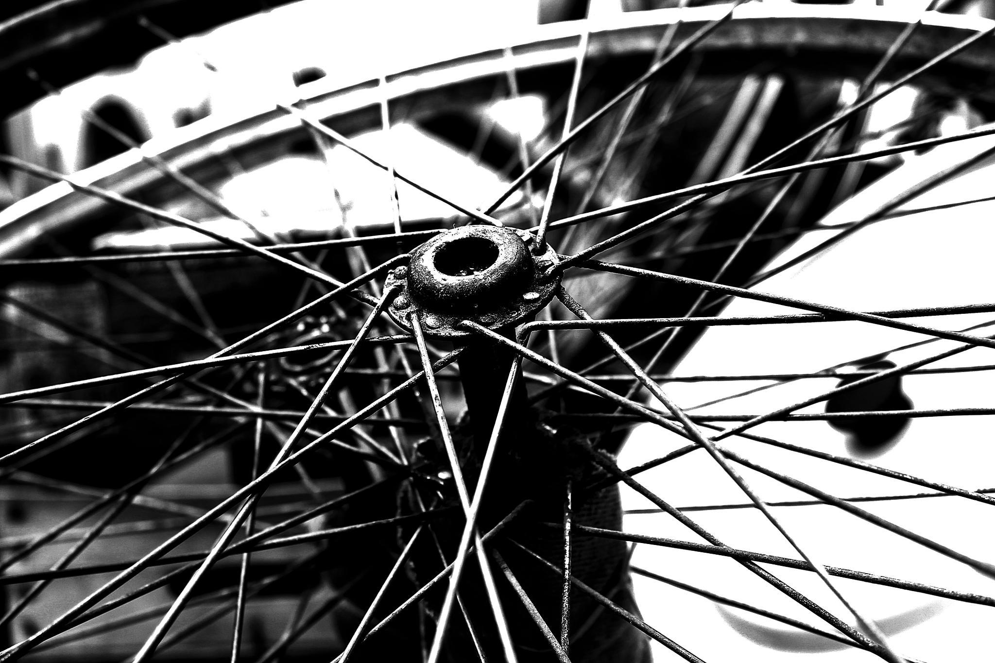 bicycle wheel by Péter Hóbor