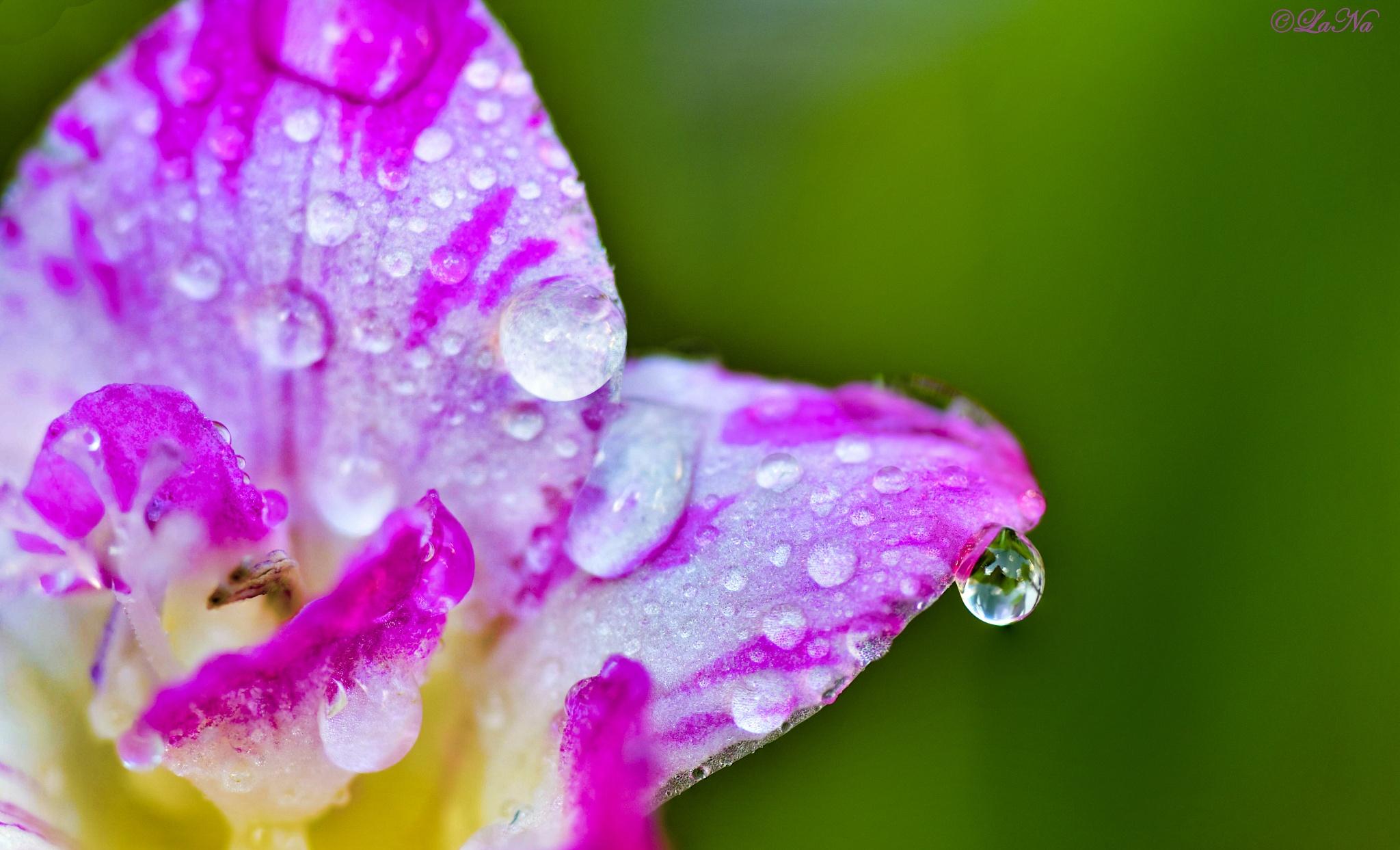 Drop of Rain by Lana Hussain