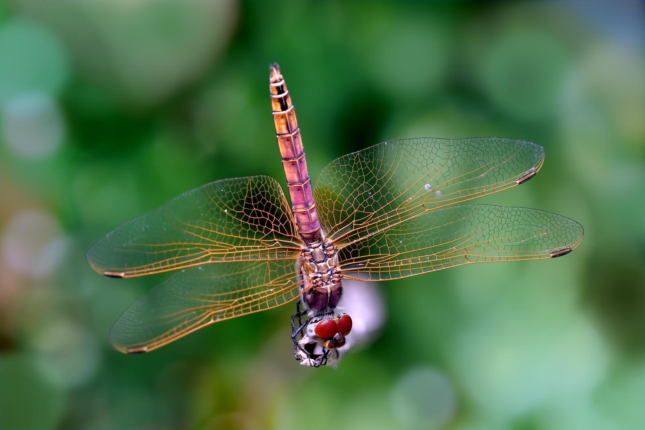 a pair of wings doesn't make you a dragonfly by Marcello Machelli