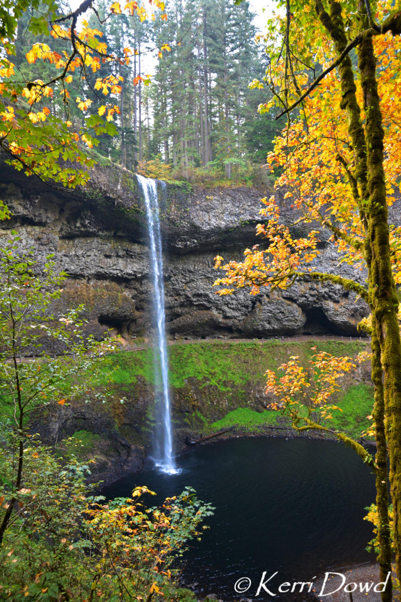 Silver Falls State Park by Kerri Miles