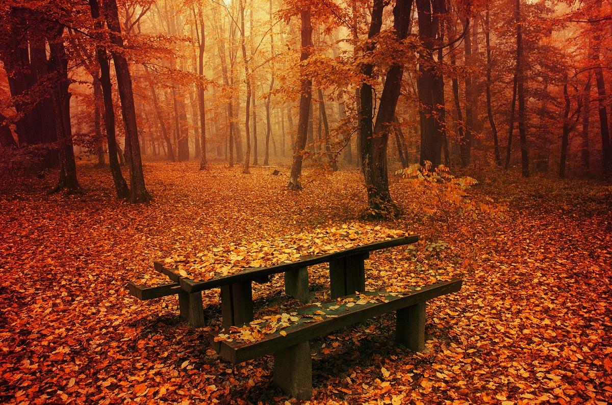 Simply Autumn II. by Zsolt Zsigmond