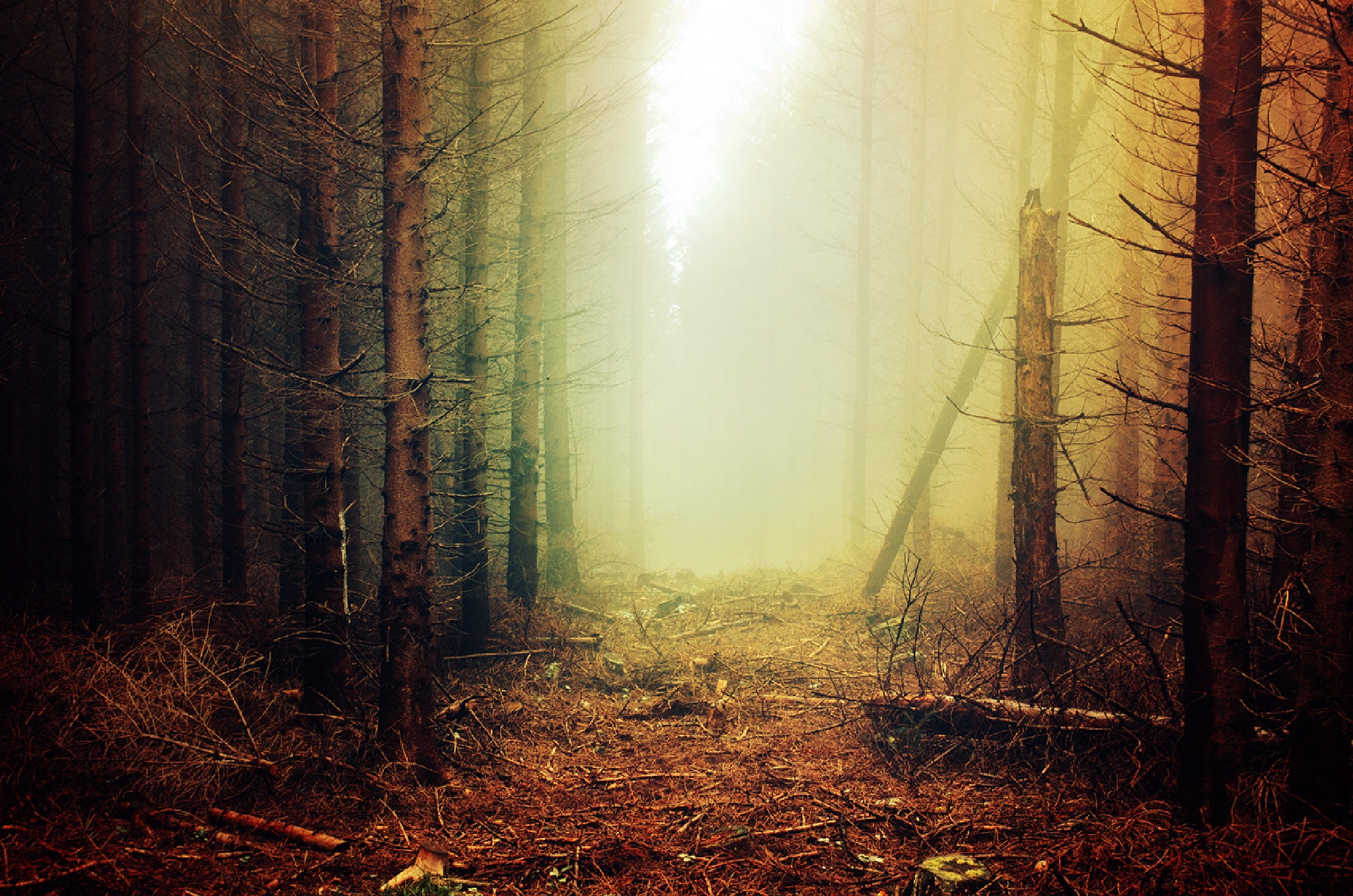 If These Trees Could Talk XXXIV. by Zsolt Zsigmond