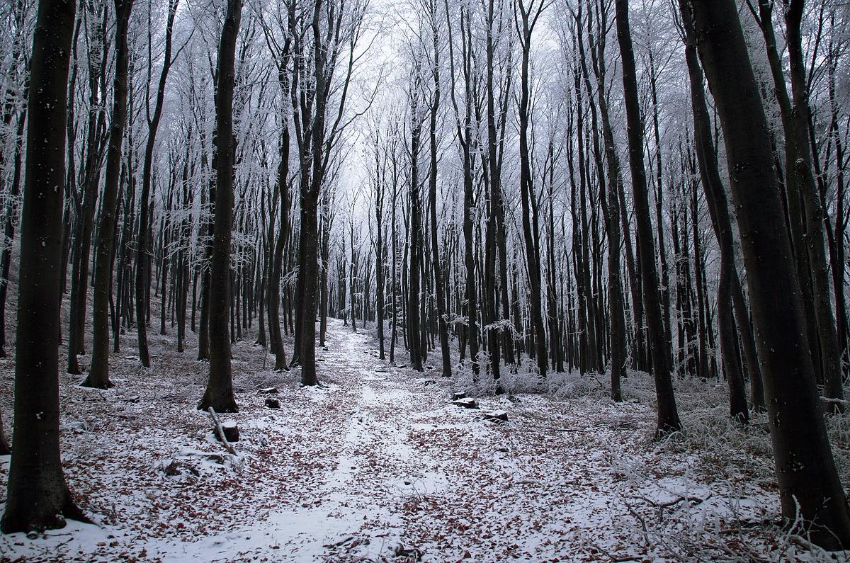 Winter Woods VII. by Zsolt Zsigmond