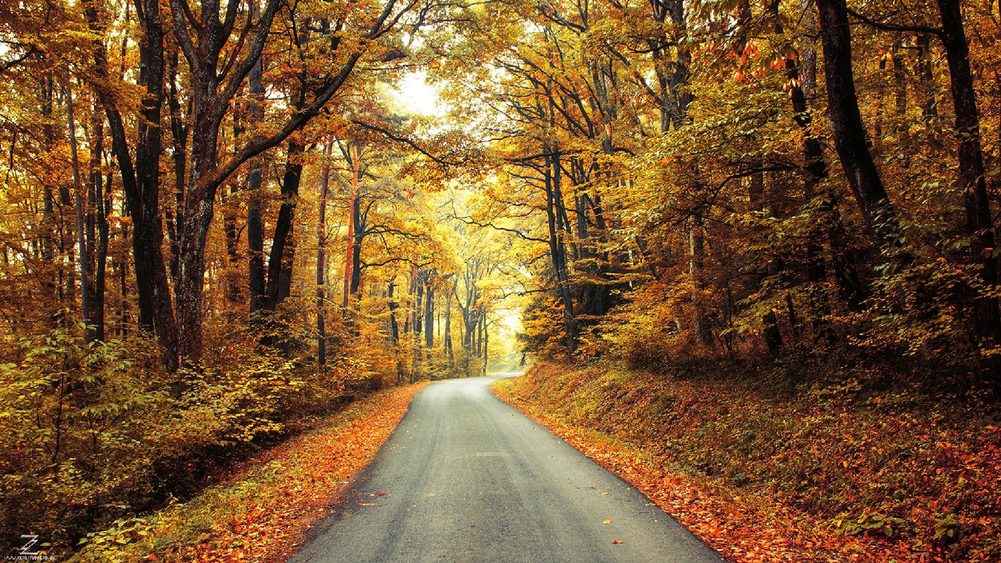 Autumn Journey pt.17. by Zsolt Zsigmond