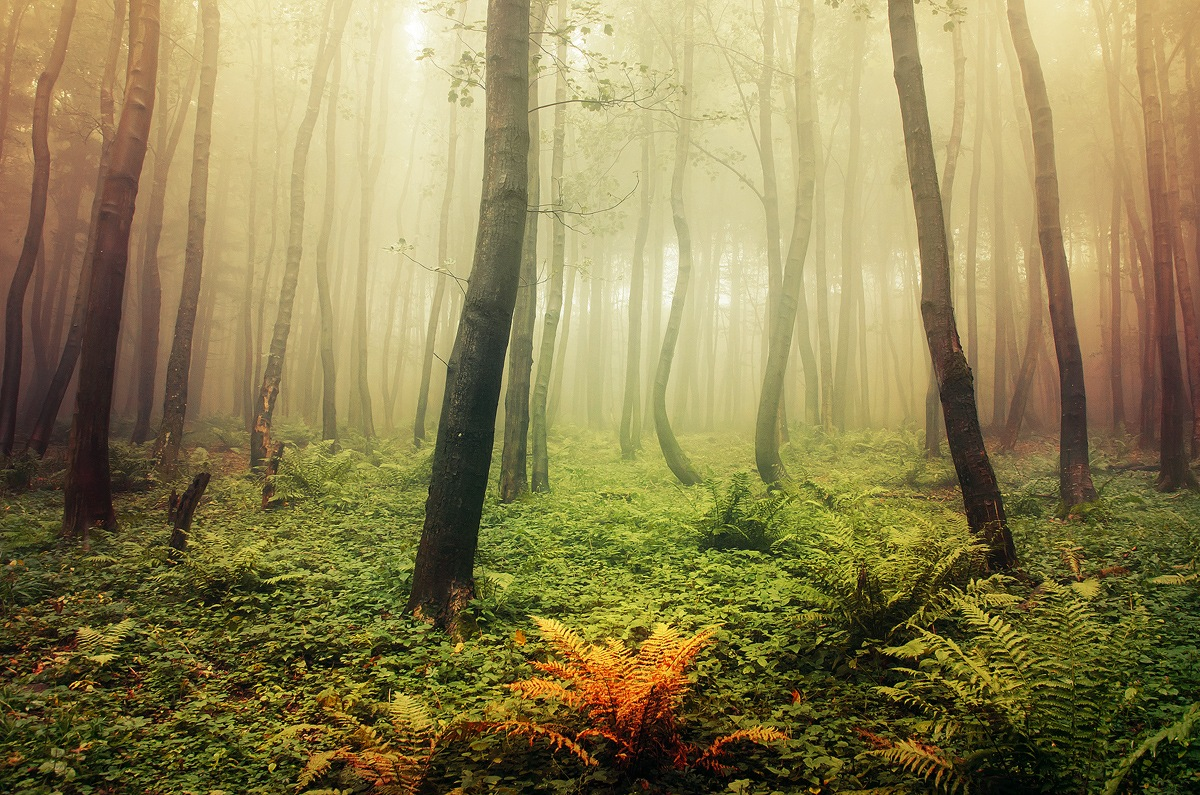 If These Trees Could Talk LXXXII. by Zsolt Zsigmond
