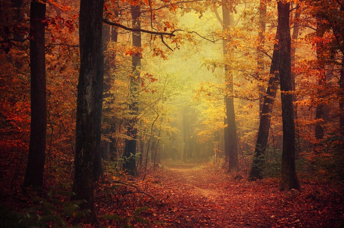 Autumn Walk XLII. by Zsolt Zsigmond