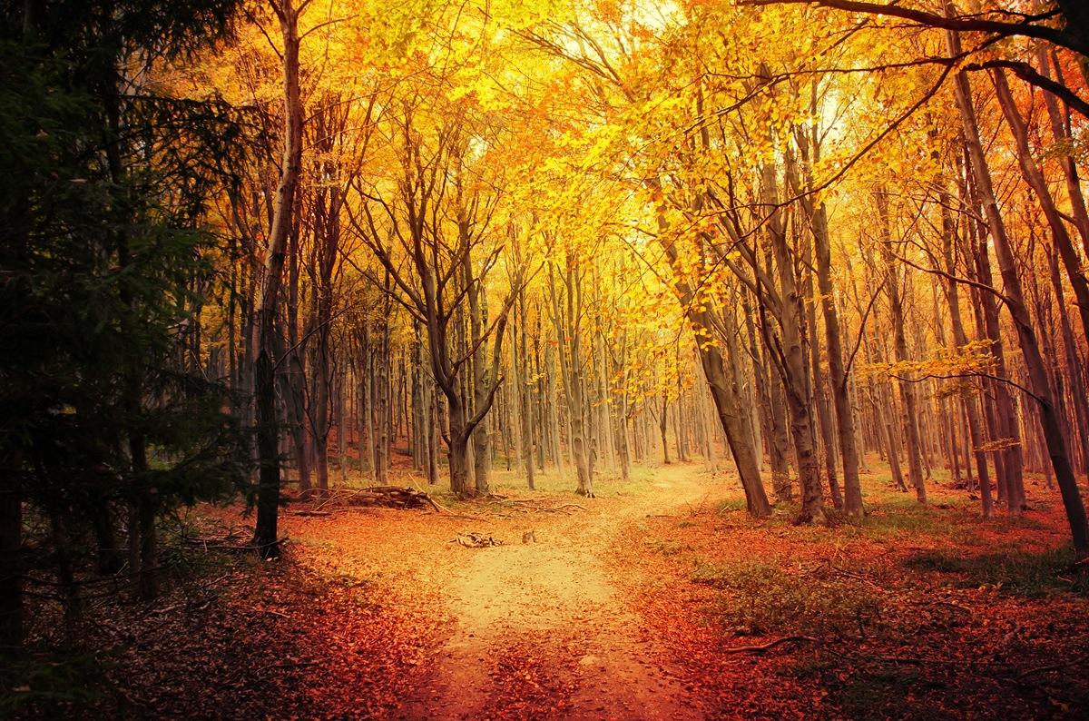 Autumn Walk LXI. by Zsolt Zsigmond