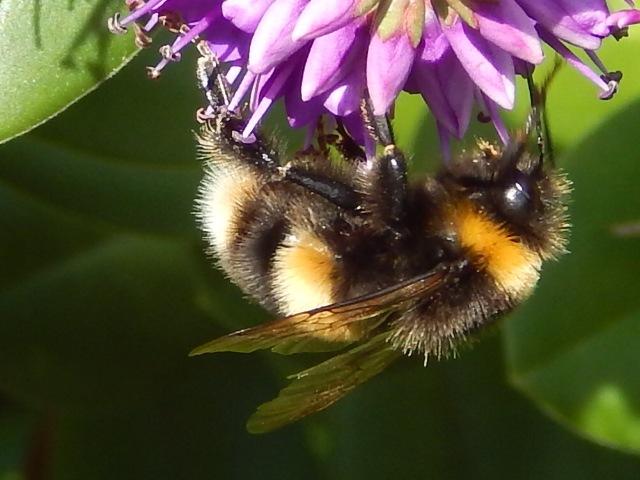 buzzzzzzz by malcolmwoodhams9