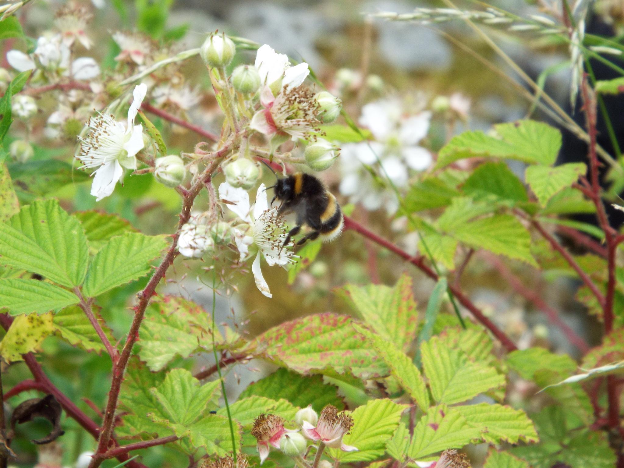 pollinator 2 by julie