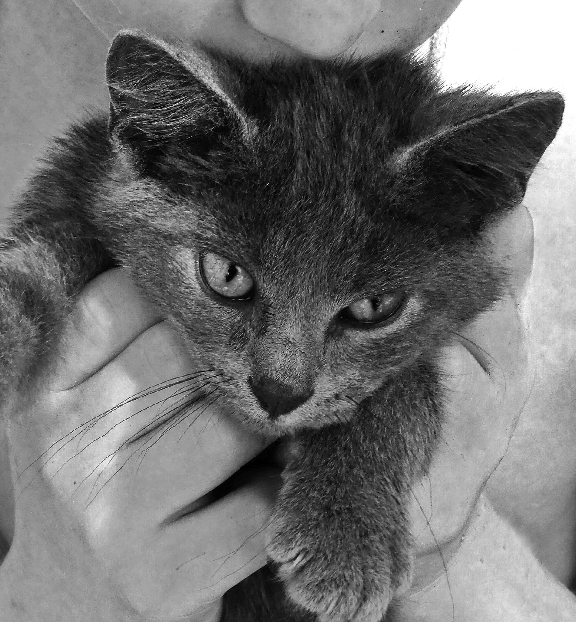 Photo in Random #cat #kitten #black and white #animal