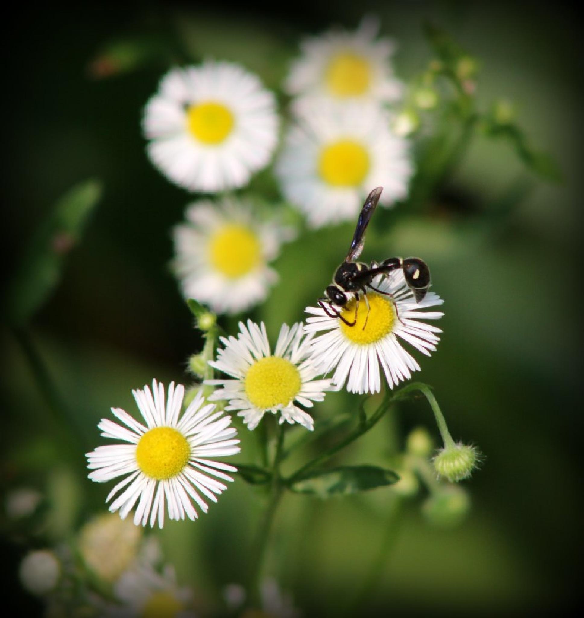 Flowers by angelgirlbroken