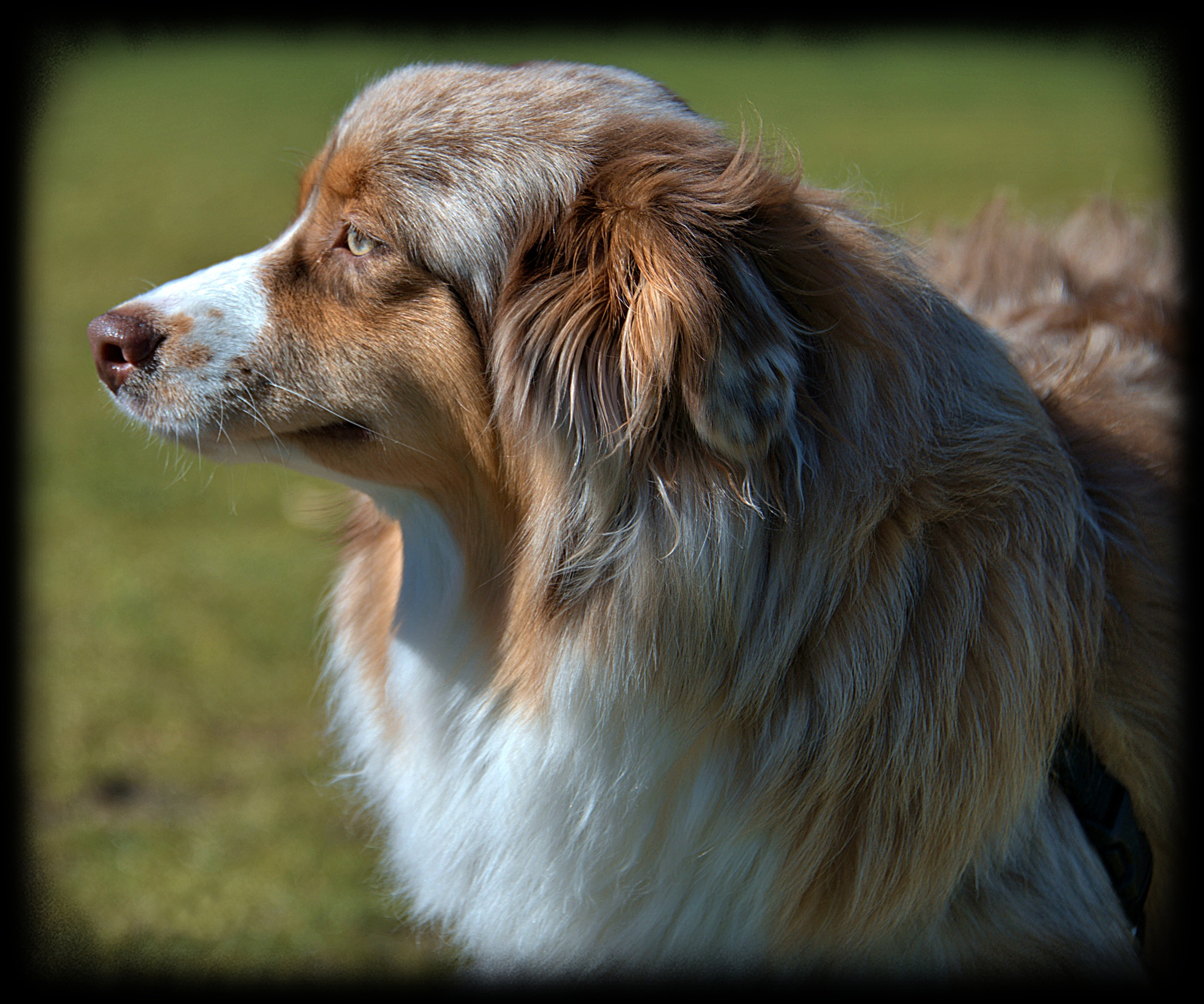 Dog Profile by pscottwong