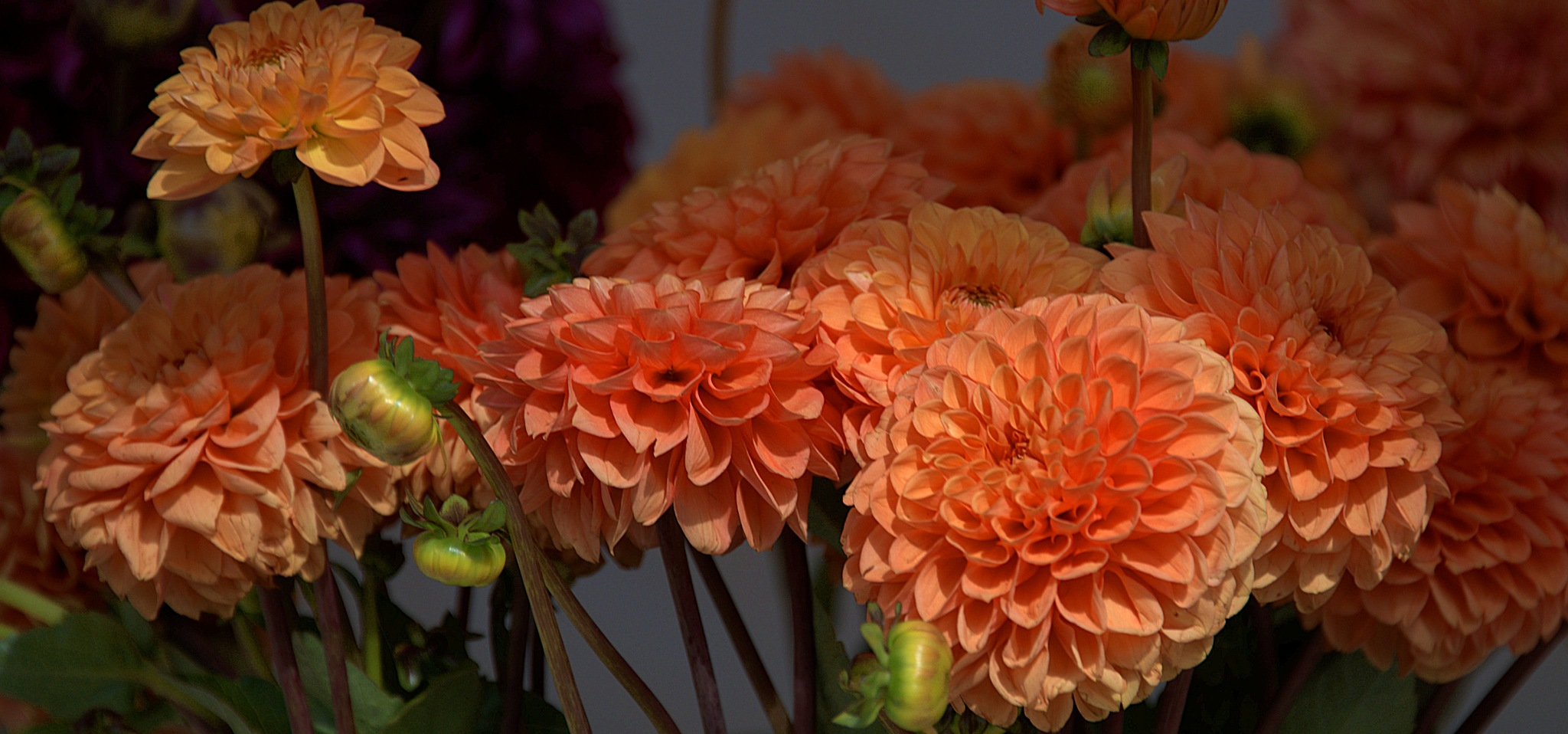 Orange Beauties  by pscottwong
