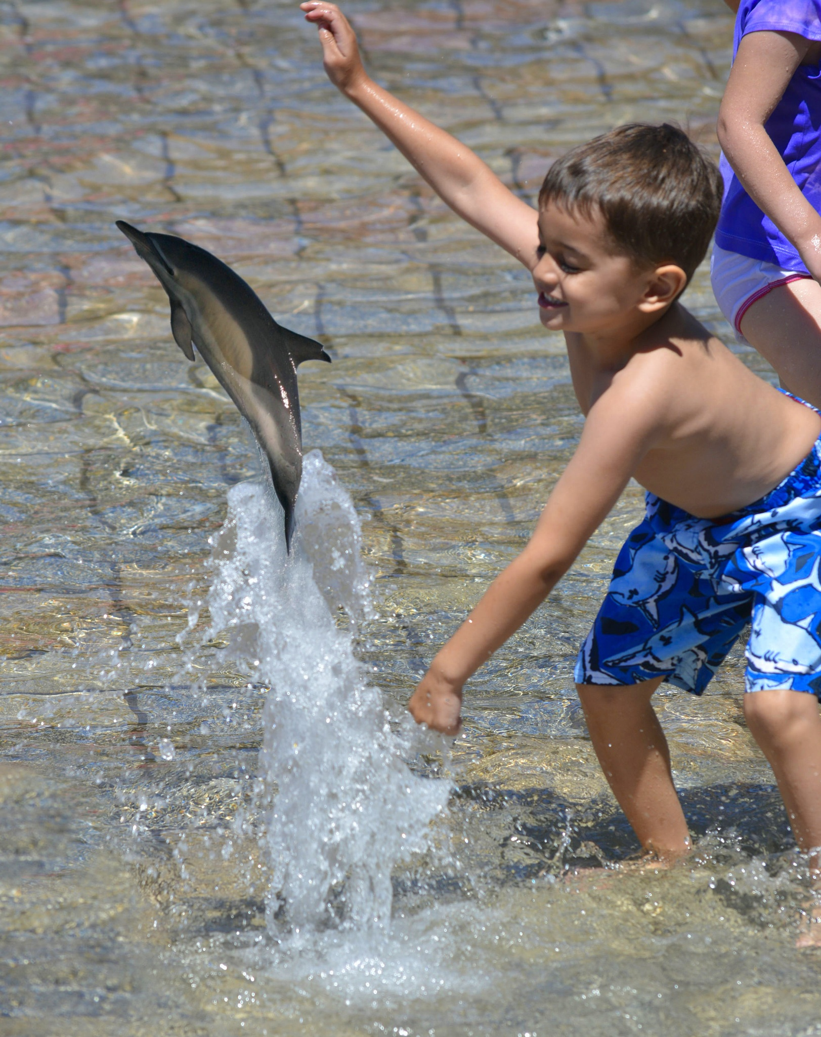 Photo in People #dolphin #mamel #water #boy #play #jump