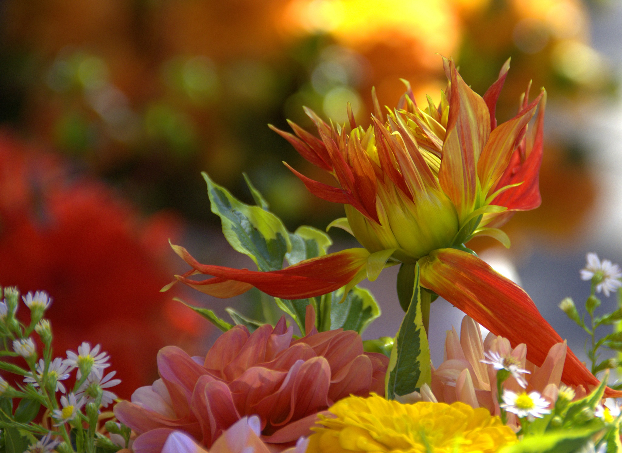 Bouquet & Bokeh by pscottwong
