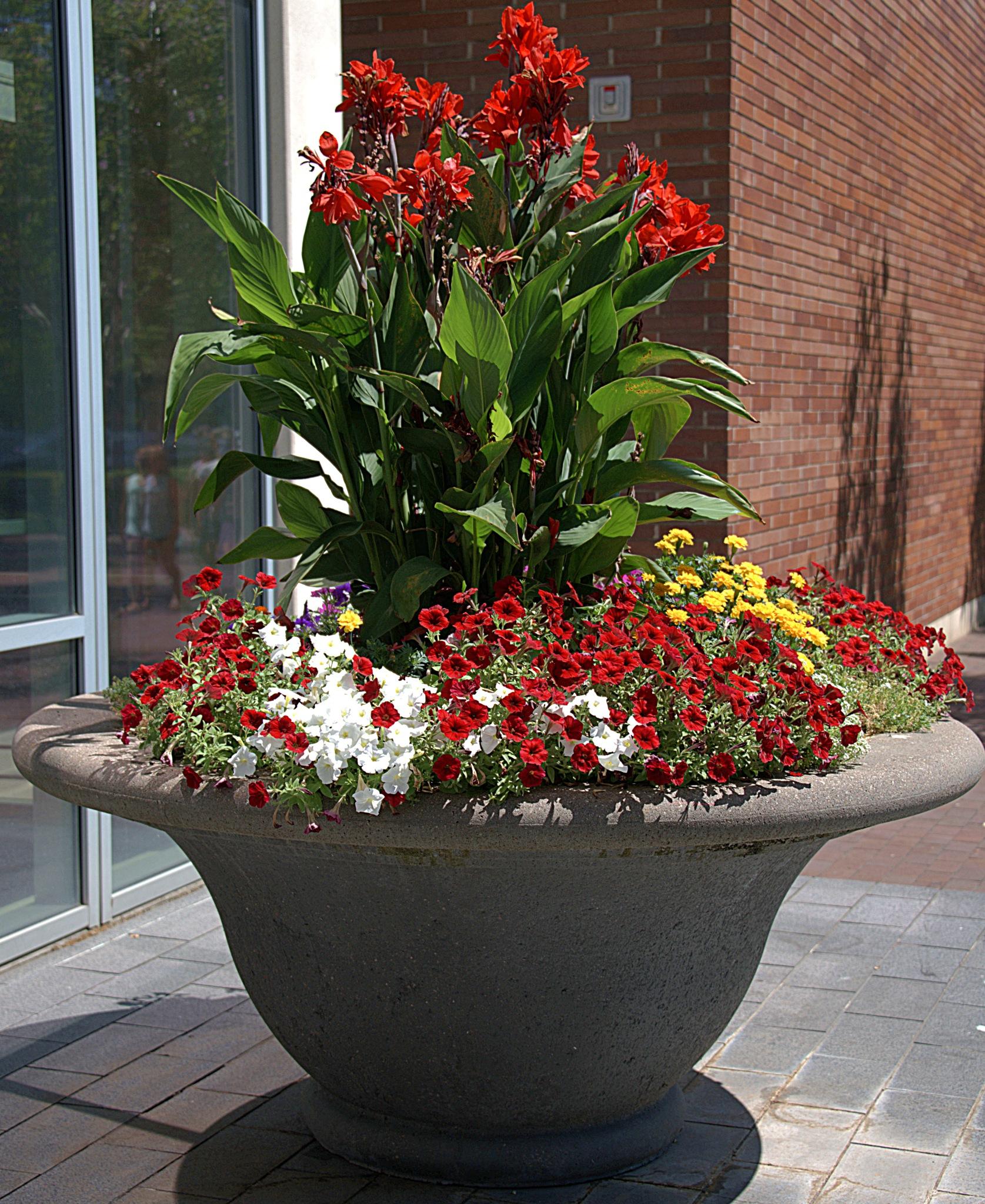 Big Flowerpot by pscottwong