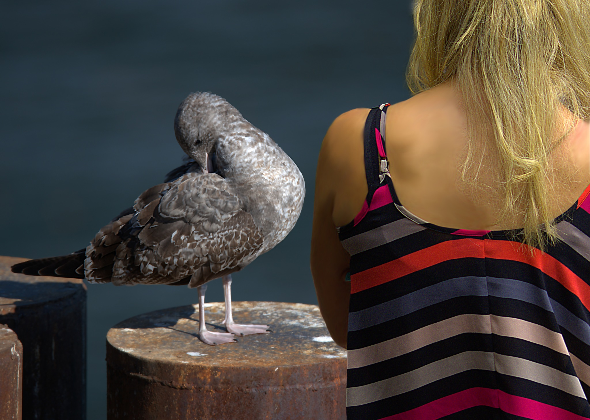 Bird Watching by pscottwong