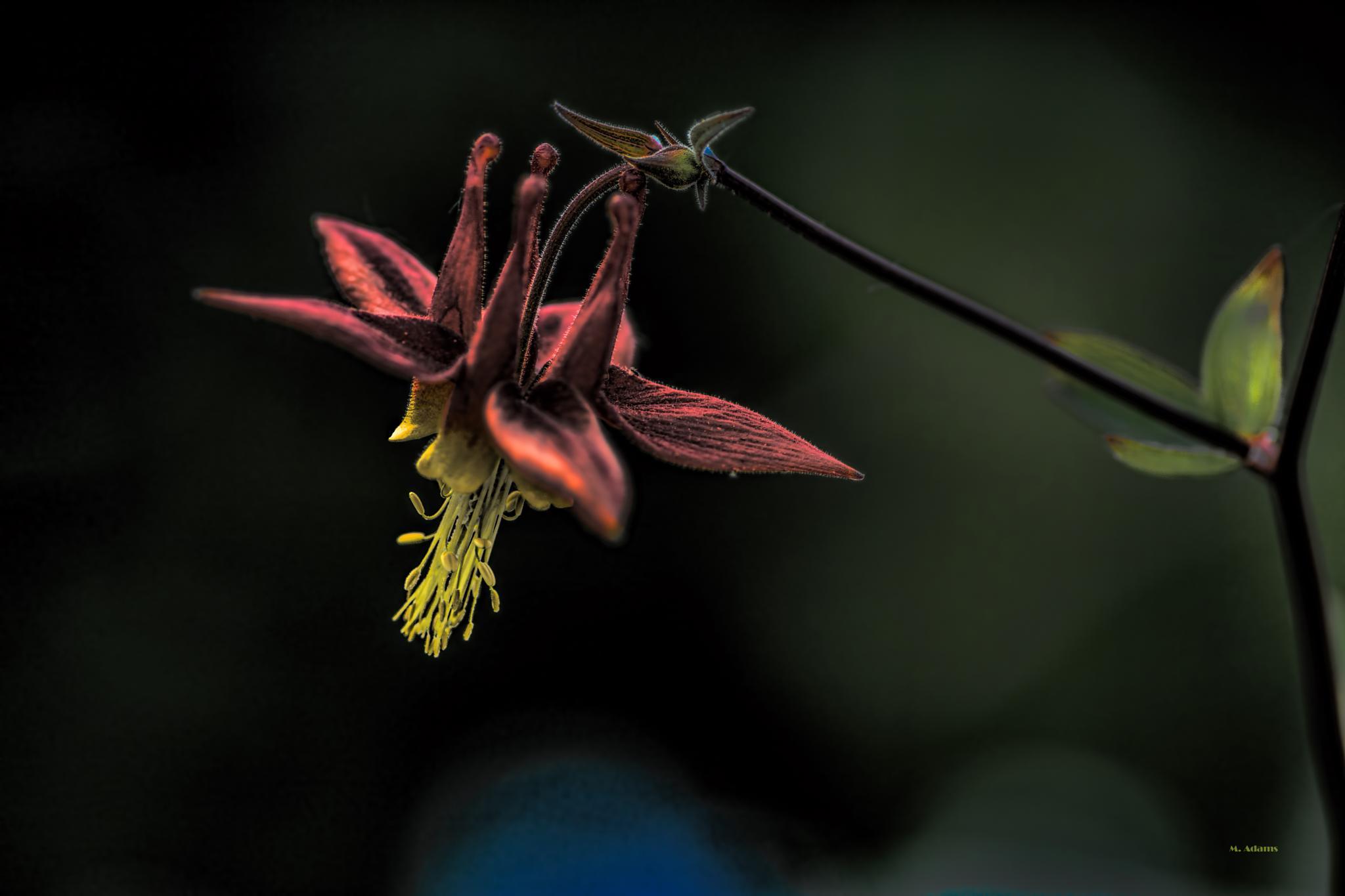 Photo in Macro #flower #wild #pnw #chinook #pass