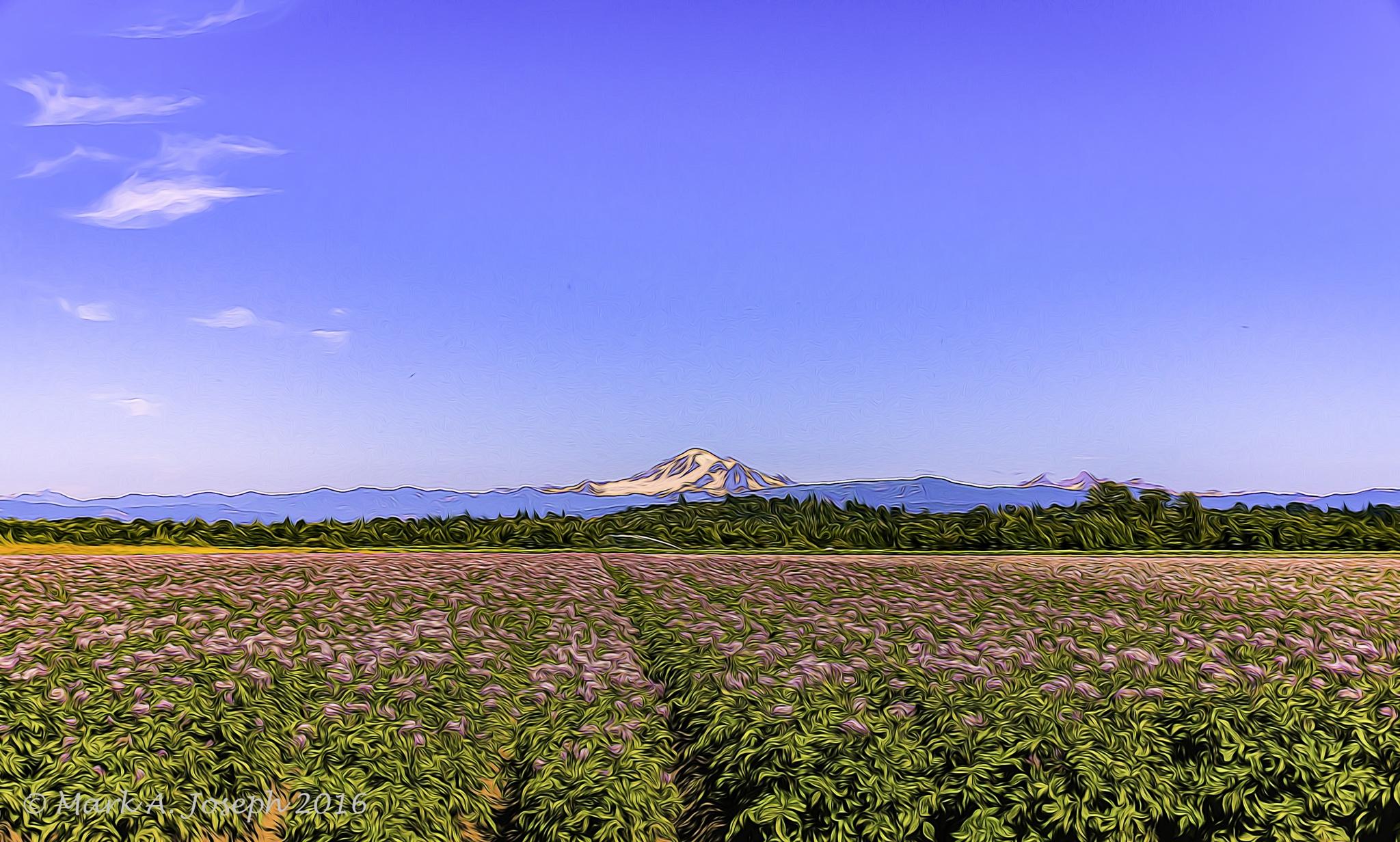 Field of Potatoes by Mark Joseph