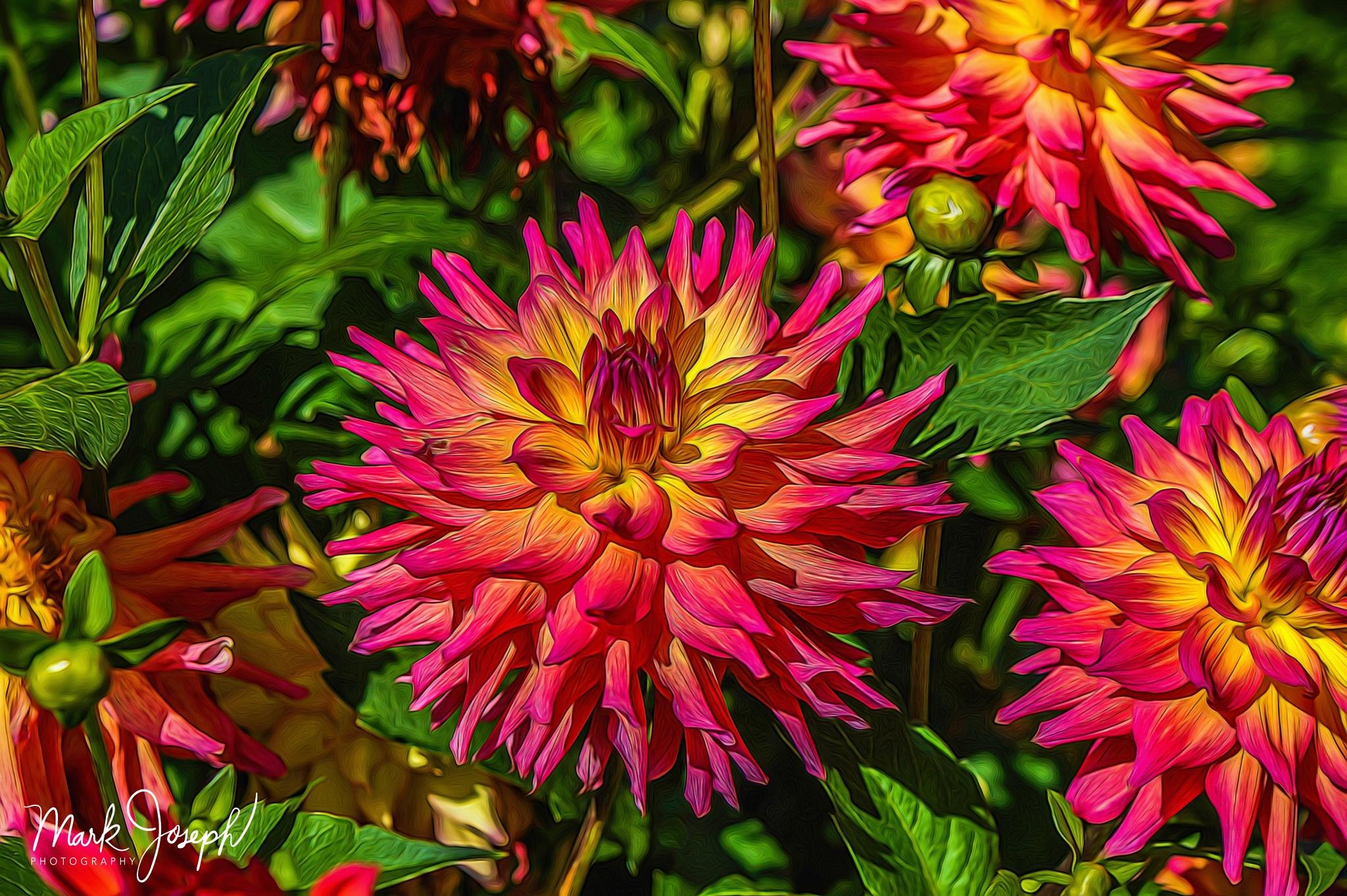 Floral Garden by Mark Joseph