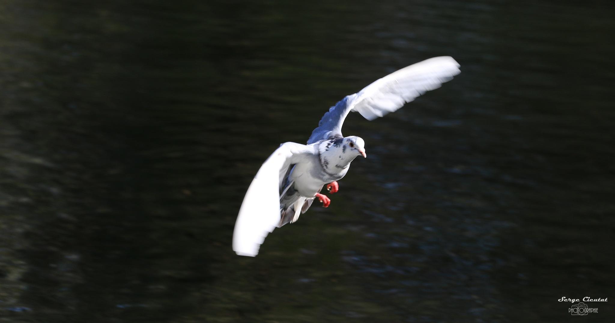 atterrissage by Cieutat serge