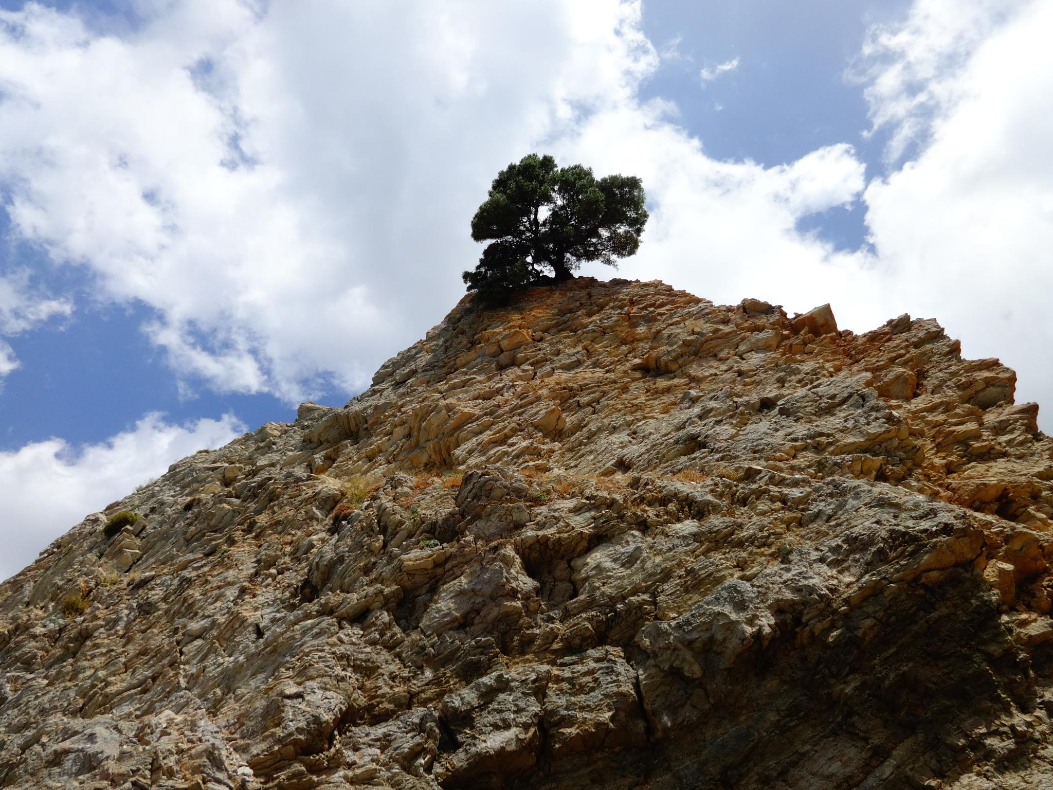Tree on the cliff by elena