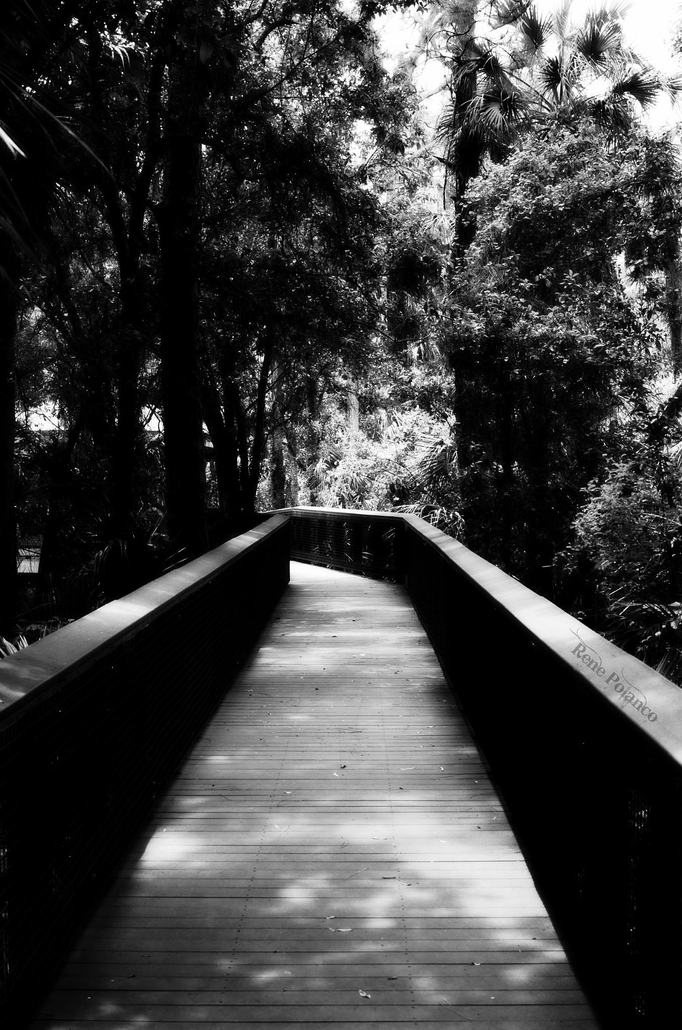 Path to One's Self by Rene Polanco