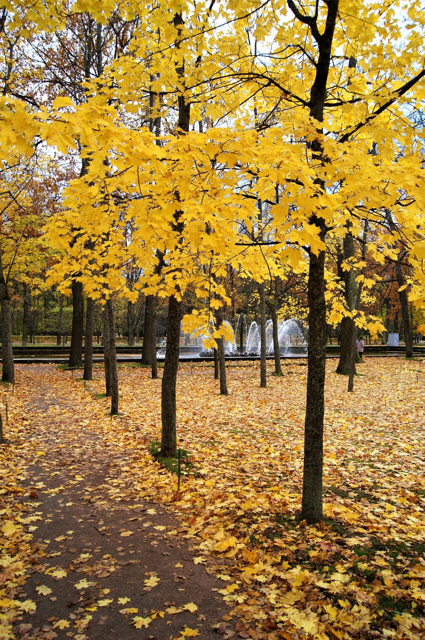 Нижний парк. by pavelbatranov
