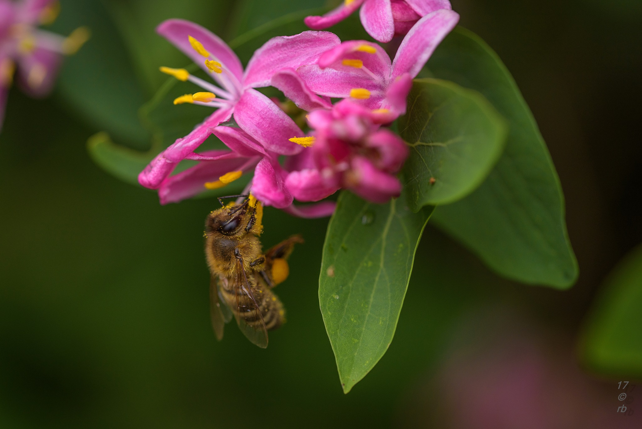 Honigsammler by Beart Black