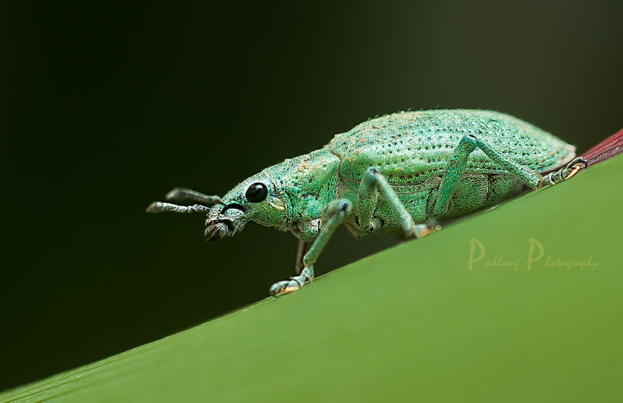 Turn Green by Paklang