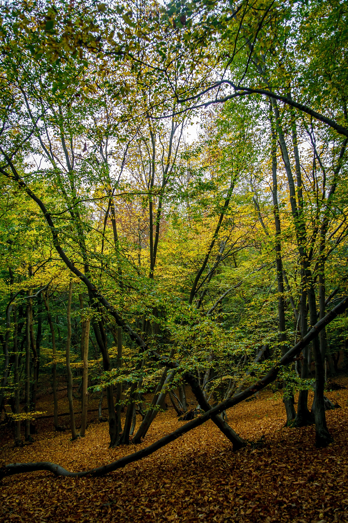 Autumn Woods by DRJonsey