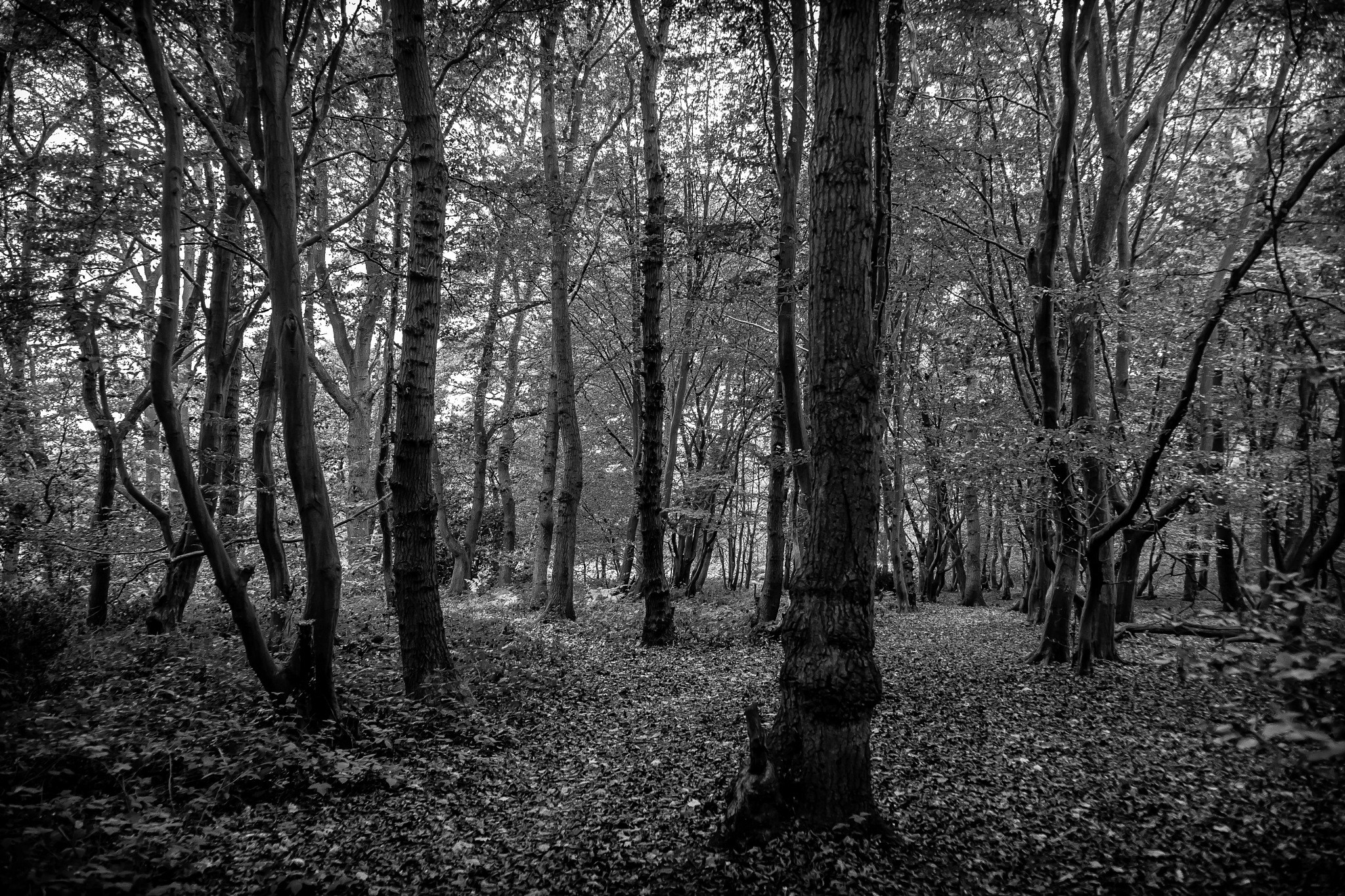 Autumn Woods 2 by DRJonsey