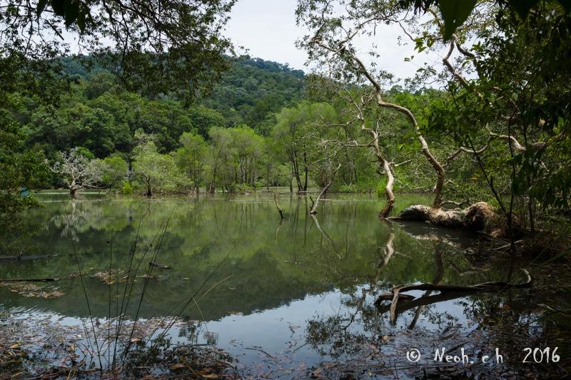 Lake by neohch