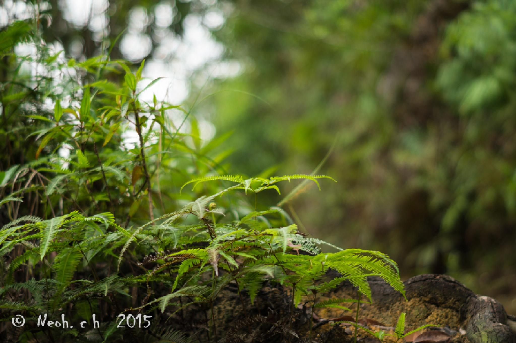 Green green by neohch