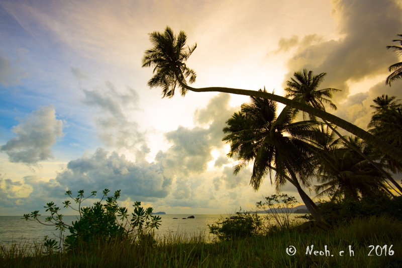 Coconut tree by neohch