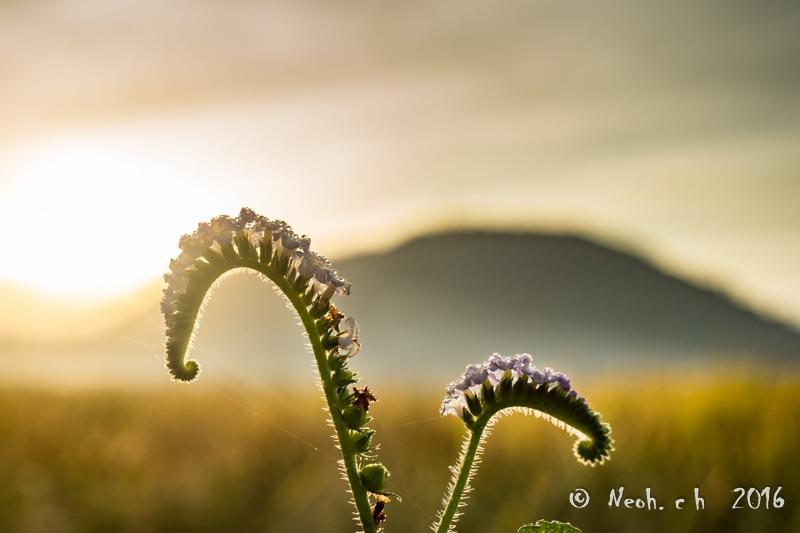Wild Flower by neohch