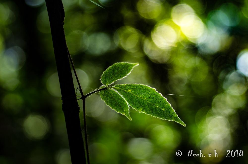 green by neohch