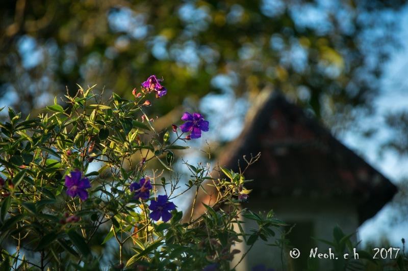 Garden by neohch