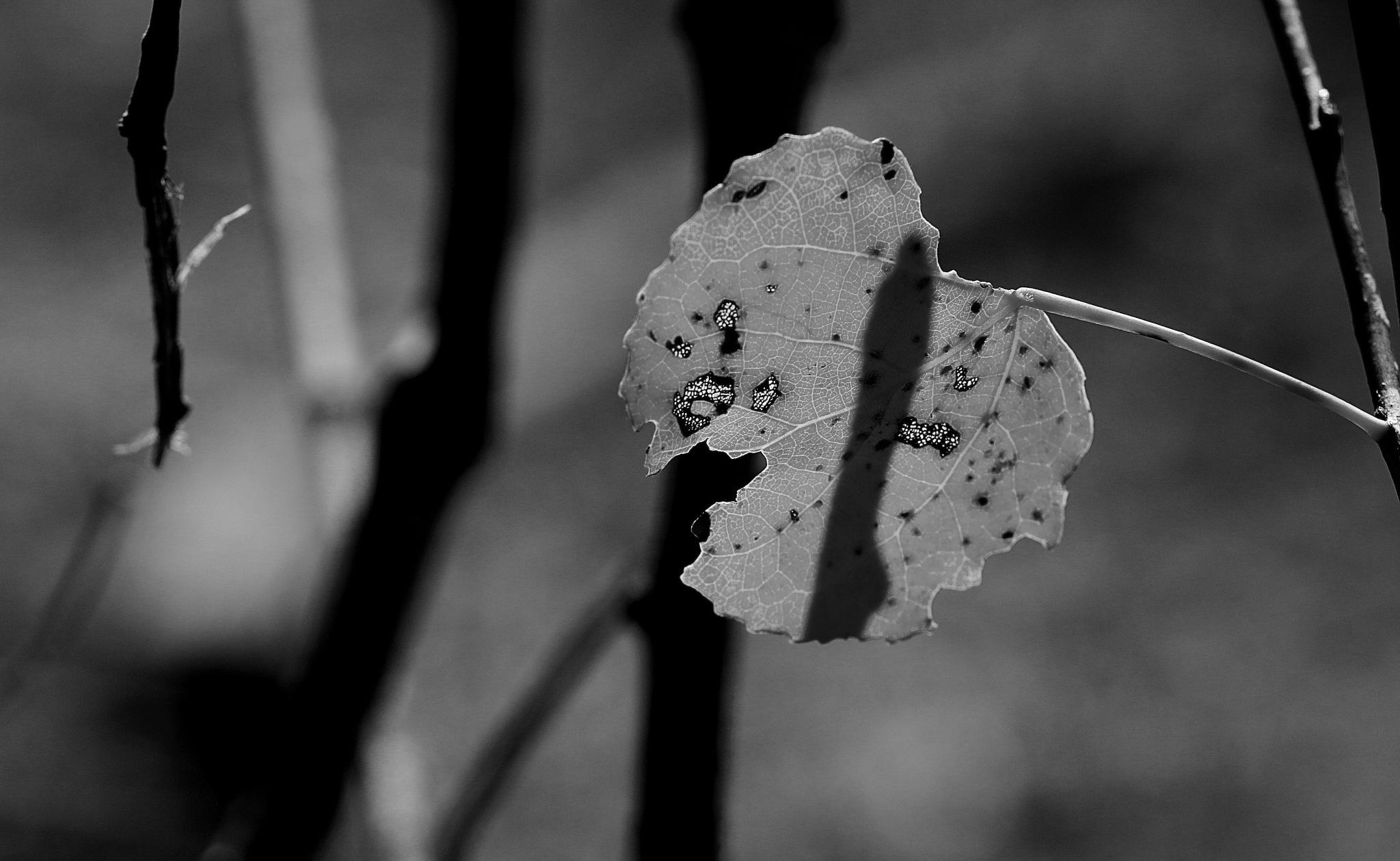 leaf by cindascheef