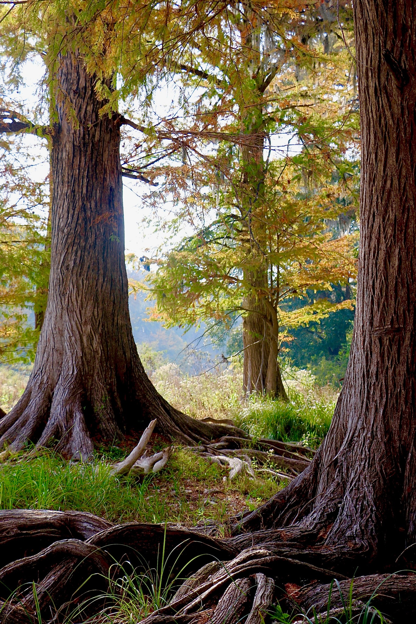so fall begins by cindascheef