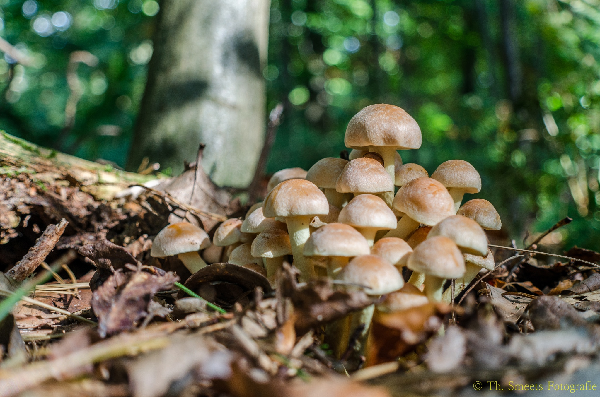 Mushrooms by Theo Smeets