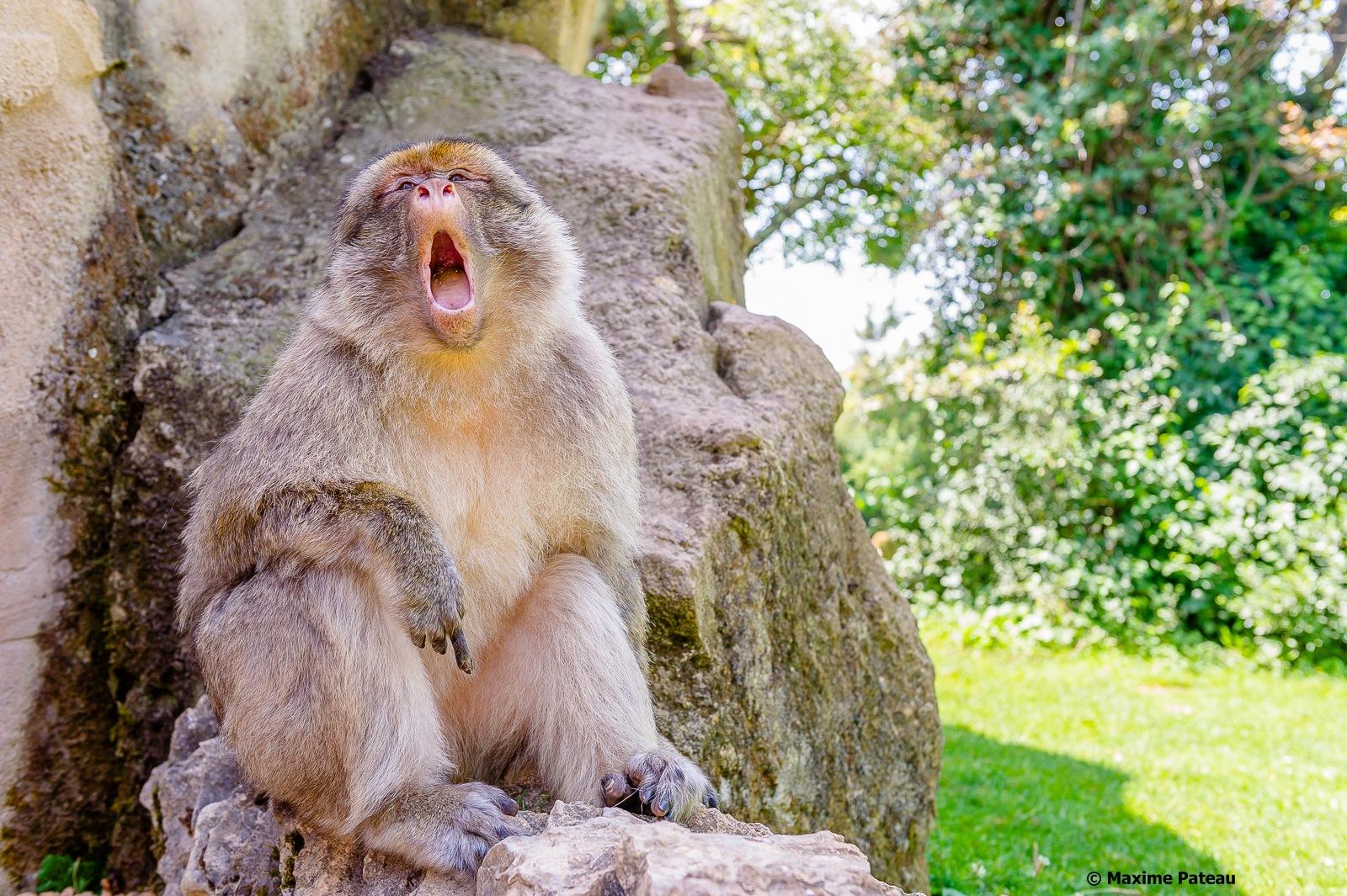 Small Yawning by Maxime Pateau > #Photosplus