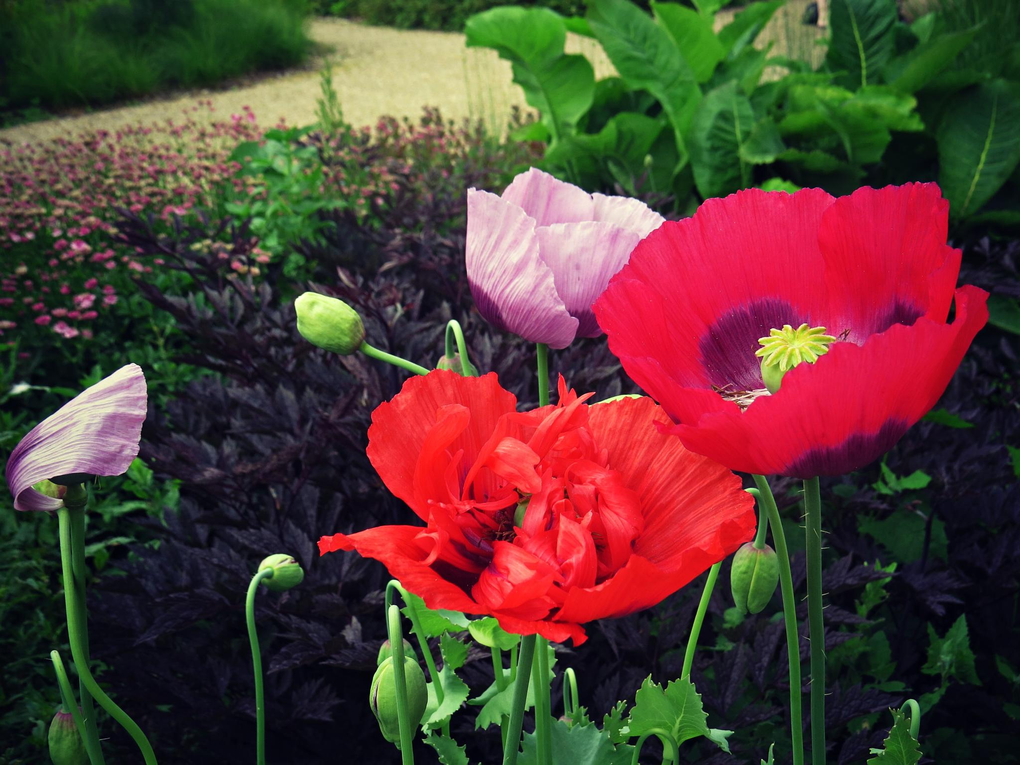Flowers by Dacki76