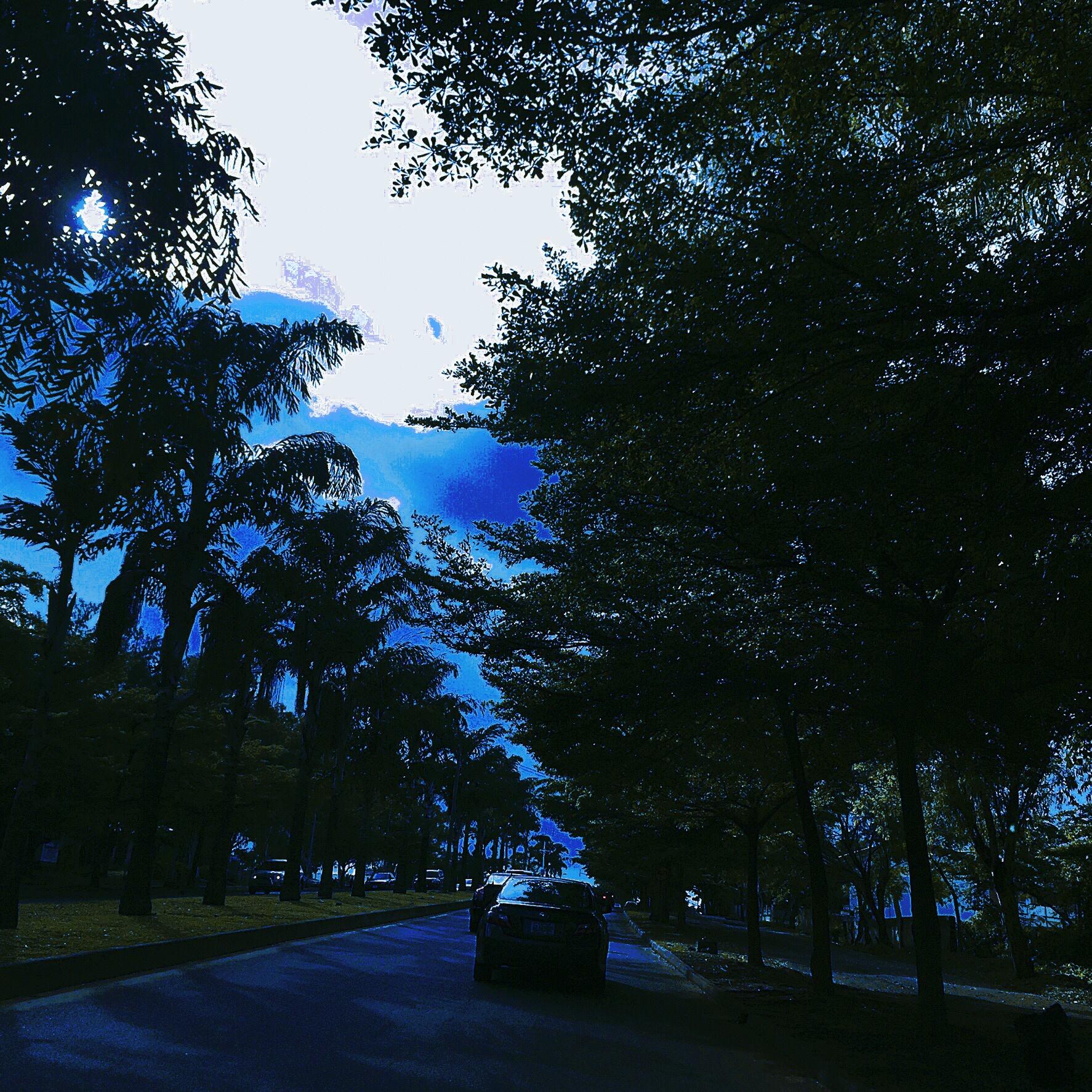 Blue Canopy by ggsani